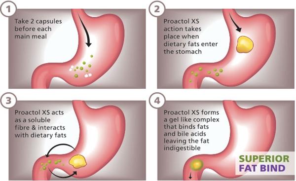 XS Proactol איך זה עובד סקירה - האם זה בטוח?  קרא את הסקירה המלאה